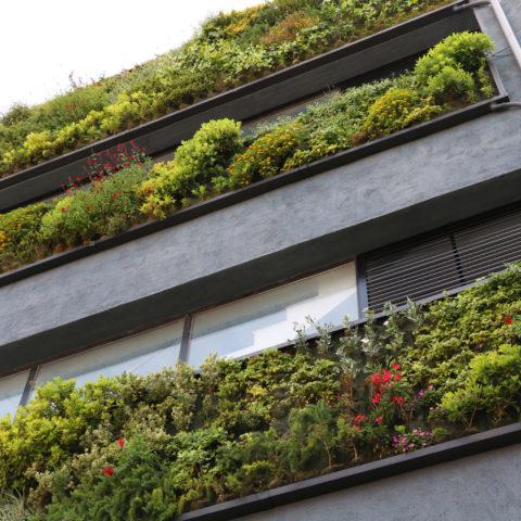 """""""Reimagina, recrea i restaura"""" en el Dia Mundial del Medi Ambient"""